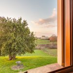 vista-albero-finestra-girasoli